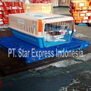 export anjing