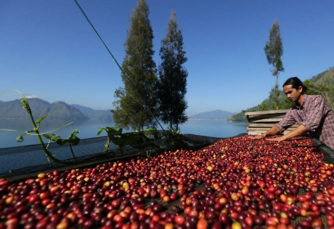Coffee Indonesia GAYO
