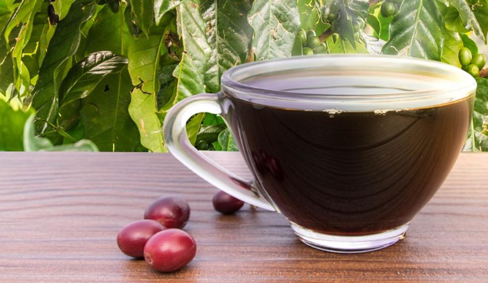 Coffee Kintamani