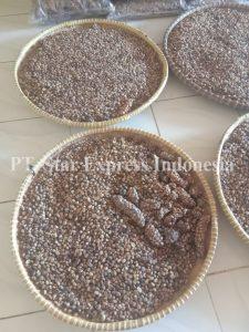 Luwak coffee harvest