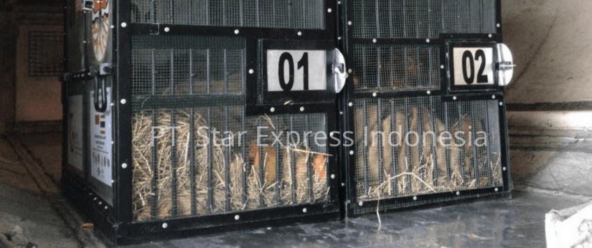 Import Hewan dari Luar Negeri