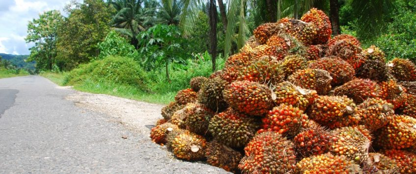 Jasa Eksport Import Perkuat Indonesia di Mata Dunia